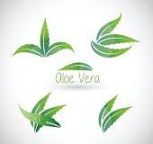 Aloe Vera  - vector illustration isolated on white background