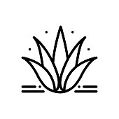 Icon for agave, plant, alovera, nature, cactus, foliage, exotic, herbal