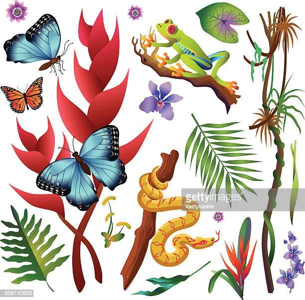 Amazonas Regenwald-Dschungel-Pflanzen und Tiere in Farbe
