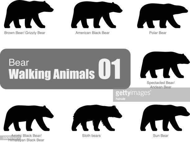 American black bear walking side flat 3D icon design