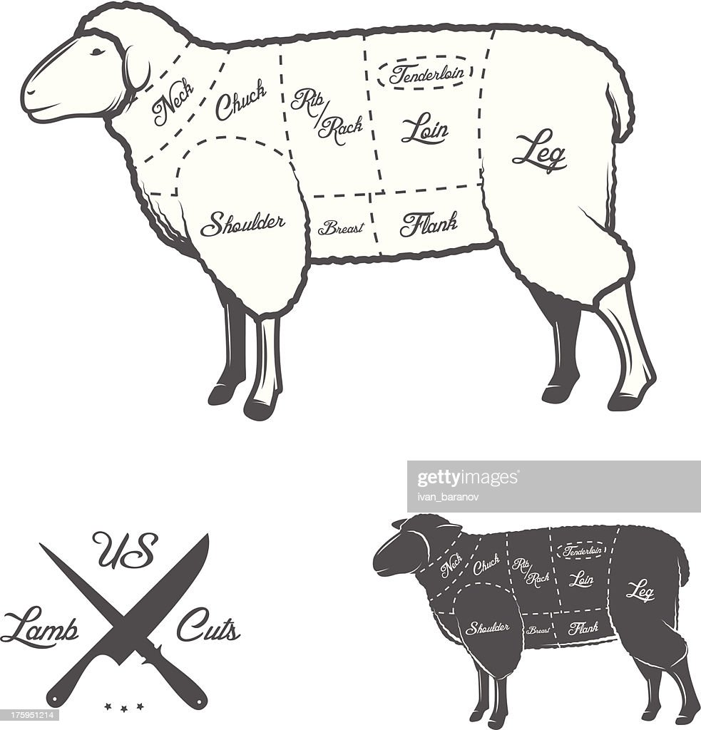 Sheep Anatomy Diagram - Smart Wiring Diagrams •