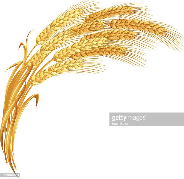 An artistic impression of golden ears of wheat