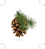 Pine cone with branch. Eps10 vector illustration contains transparency and blending effects.