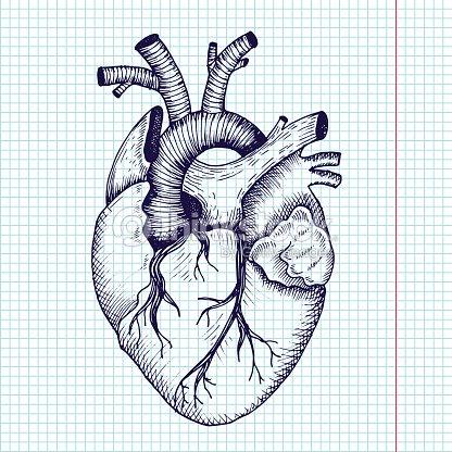 C ur anatomique style vintage d taill e de - Dessin coeur humain ...