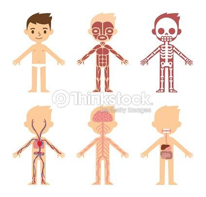 Anatomy Chart For Kids Vector Art Thinkstock