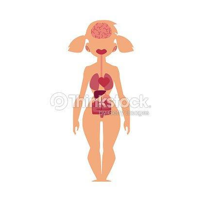 Anatomy Chart Human Internal Organs Female Body Vector Art Thinkstock