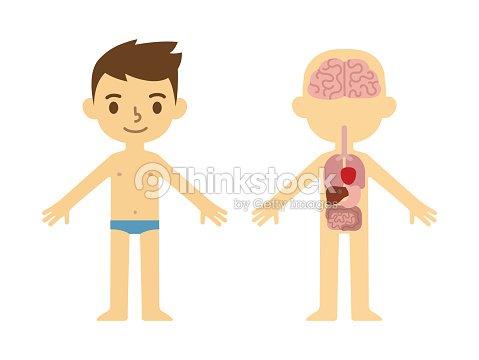 Anatomie Poster Für Kinder Vektorgrafik | Thinkstock