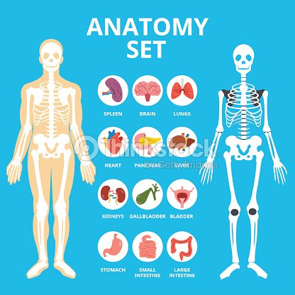 Anatomy Set Anatomy Infographics Human Internal Organs Icons Set