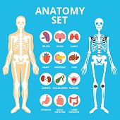 Anatomy set, anatomy infographics. Human Internal organs icons set, body structure, skeleton. Flat illustration graphic for web sites, web banners, infographics, printed materials. Vector illustration