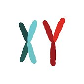 X and Y chromosome icon in flat style isolated on white background