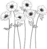 Anemone flowers drawing and sketch with line-art on white backgrounds.