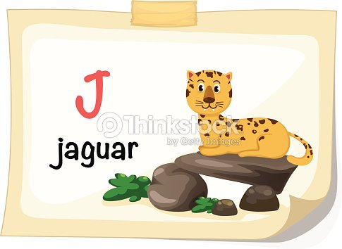 Animal Alphabet Letter J For Jaguar Ilration Vector