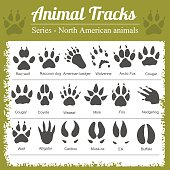 Animals Footprints - North American animals - vector set