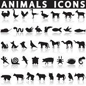 Animal icons set on a white background with a shadow