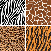 A set of animal seamless pattern: giraffe, leopard, tiger and zebra skin. This vector is very good for design that need animal element.