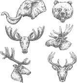 Animal isolated sketch set of african and forest mammal animal. Elephant, bear, deer, grizzly, elk, reindeer, antelope, moose and roe deer head vector symbol for hunting sport, zoo and nature design