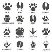 Animal tracks vector illustration. animal paw print with the description.