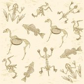 animals anatomy, skeleton of horse, pigeon, frog and turtle, archeology biology or history pattern