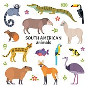 Vector illustration of exotic animals, such as cayman, tapir, capybara, ocelot, alpaca, piranha, toucan and ara. Isolated on white.