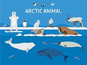 Animals of the Arctic. Vector Set of polar mammals and birds. Flat style illustration. Penguin, seal, lemming, owl, bear, fox, caribou, walrus, duck, pink Seagull gull white and greenland whale