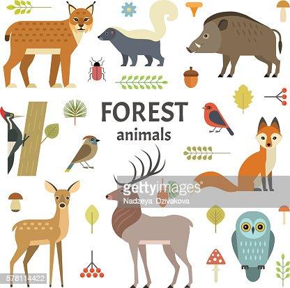 Animali  : Arte vettoriale