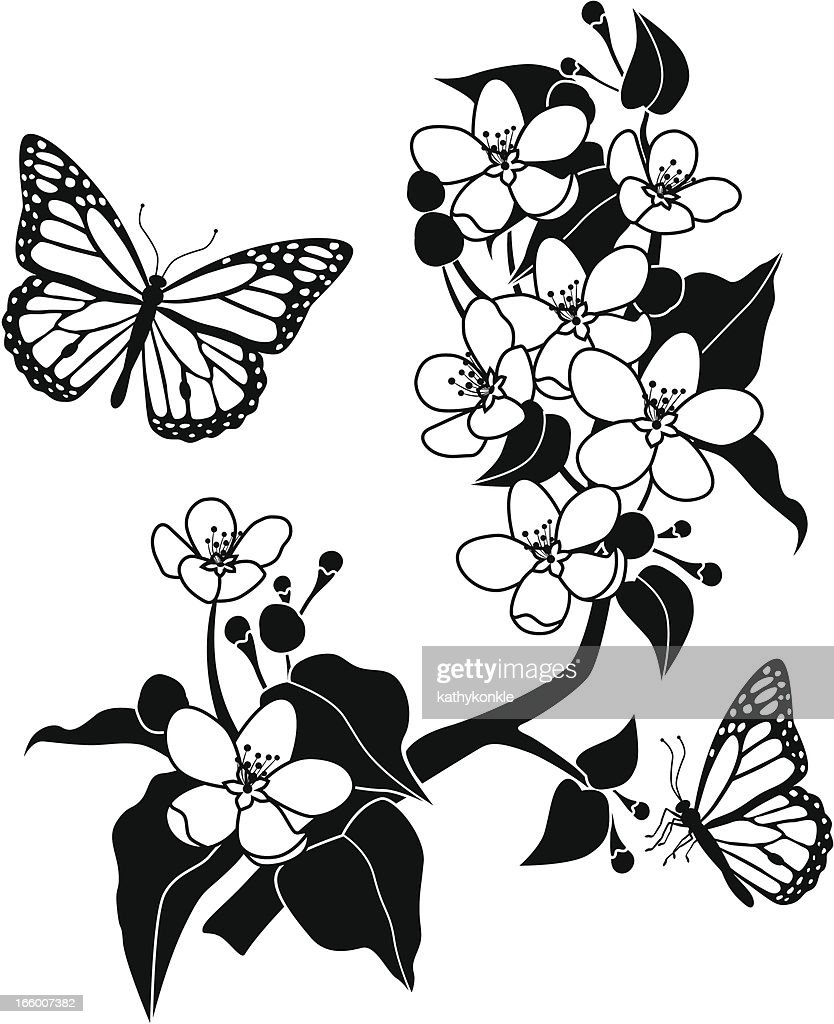apple blossoms and monarch butterflies vector art getty images