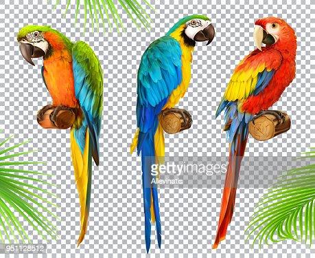 Ara parrot. Macaw. Photo realistic 3d vector icon set : stock vector