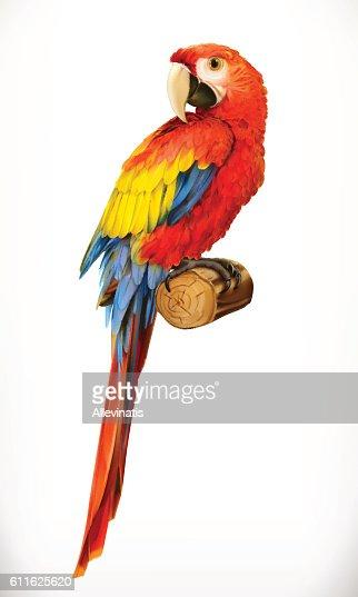 Ara parrot. Macaw. Photo realistic. 3d vector icon : stock vector