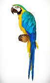 Ara parrot. Macaw. Photo realistic 3d vector icon