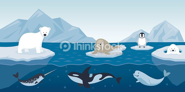 Arctic Animals Character And Background Vector Art
