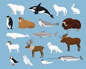 Arctic animals collection with reindeer, orca, narwhal, shark, musk ox, fox, wold, puffin, tern, moose, walrus, penguin, beluga whale, hare, polar bear, harp seal, dall sheep, snowy owl