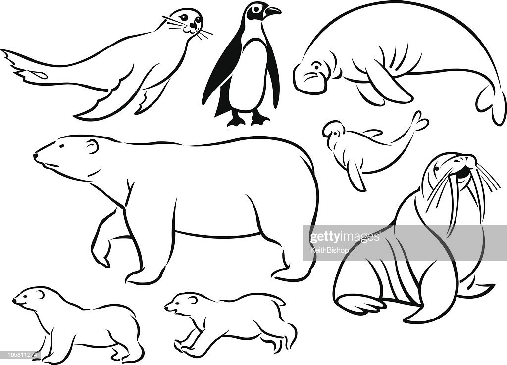 arctic sea animalspenguin walrus manatee polar bear vector