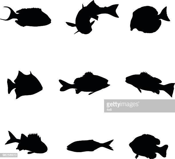 Assorted underwater sea creatures