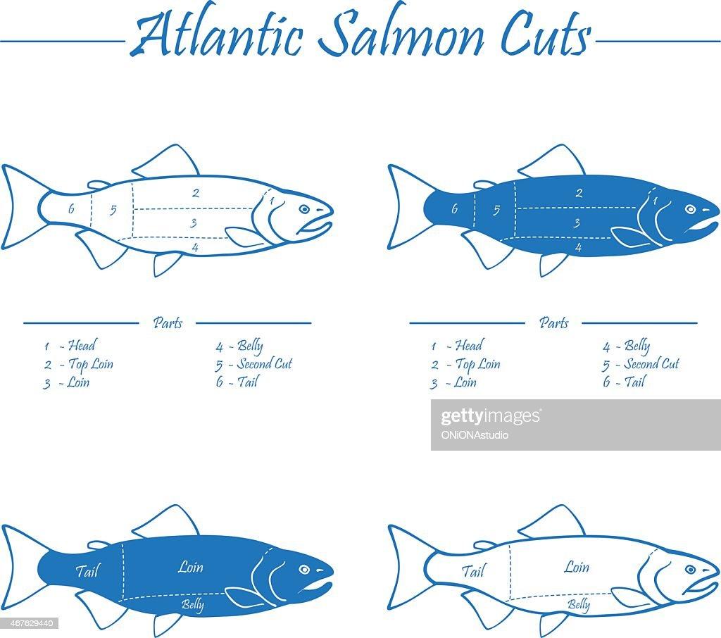 Cuts Of Salmon Diagram - Automotive Block Diagram •