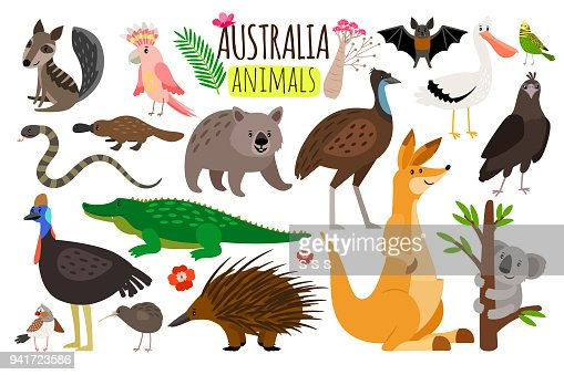 Australian animals. Vector animal icons of Australia, kangaroo and koala, wombat and ostrich emu : Vector Art