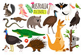 Australian animals. Vector animal icons of Australia, kangaroo and koala, wombat and ostrich emu, platypus and echidna in cartoon style isolated on white background