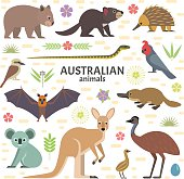 Vector illustration of Australian animals: flying fox, kangaroo, koala, Tasmanian devil, echidna, wombat, emu, cockatoo, platypus, isolated on transparent background.