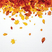 Autumn background with golden maple and oak leaves. Vector paper illustration.