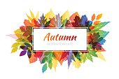 Autumn banner. White horizontal frame with colorful various leaves in transparent overlay style.