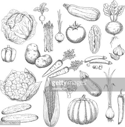 Autumn harvest sketch symbol with fresh vegetables : Vector Art