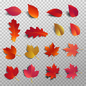 Autumn leaf pack. Realistic leave fall with shadow. Maple leaf for decorate promotion banner and printing design. Vector illustration.