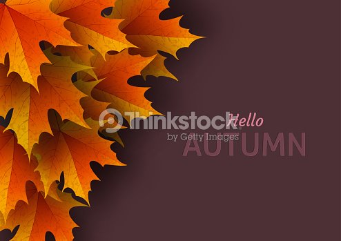 autumn leaves bright colourful autumn oak leaves template for vector