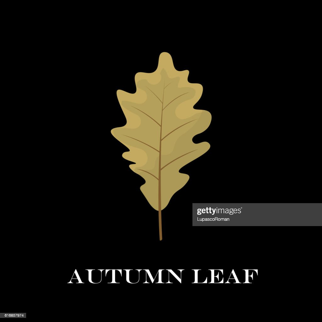 autumn leaves isolated on black background. simple cartoon flat style : Vector Art