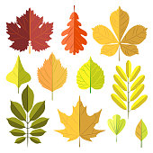 Set of autumn leaves isolated on white background. Vector illustration
