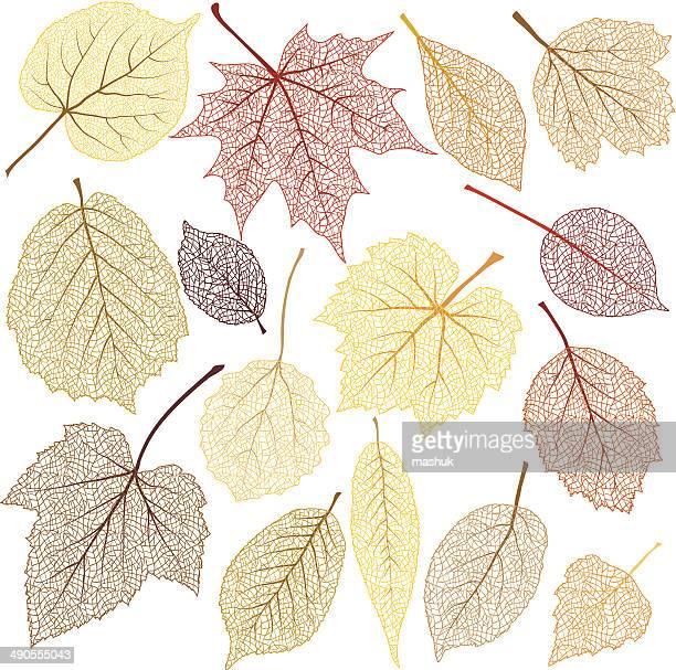 Autumn leaves with streak
