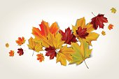 Colorful autumn maple leaves, abstract vector illustration