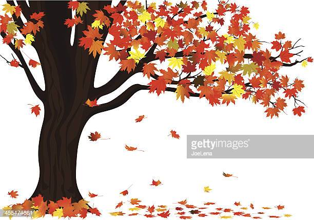 Autumn Maple Tree on White