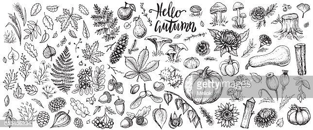 Herbstpflanzen Vektor-Skizzen. Die Hand gezeichnete Satz von Ernte, Blätter und Blüten der Saison Herbst. : Vektorgrafik