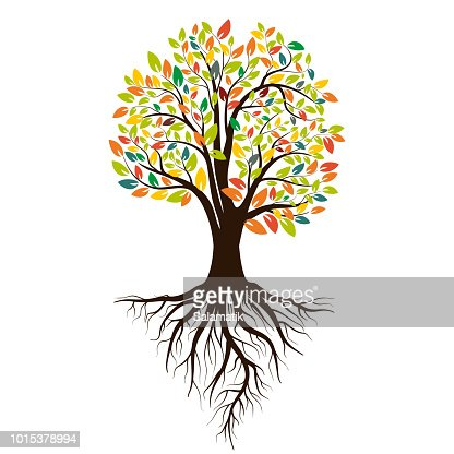 Autumn silhouette of a tree with colored leaves. Tree with roots. Isolated on white background. Vector illustration : Vector Art