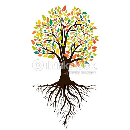 Autumn silhouette of a tree with colored leaves. Tree with roots. Isolated on white background. Vector illustration : stock vector